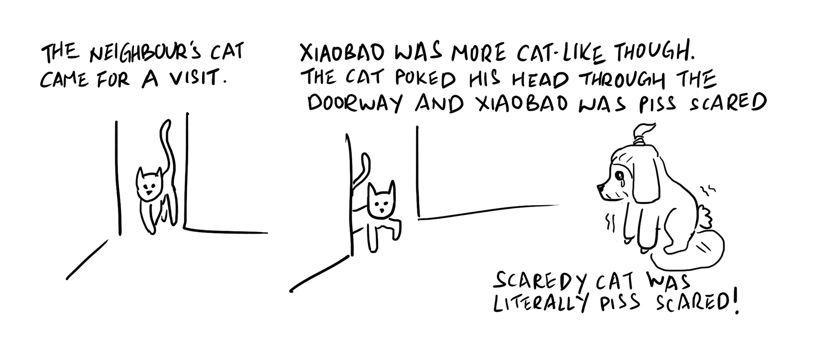 The scaredy cat and the cat