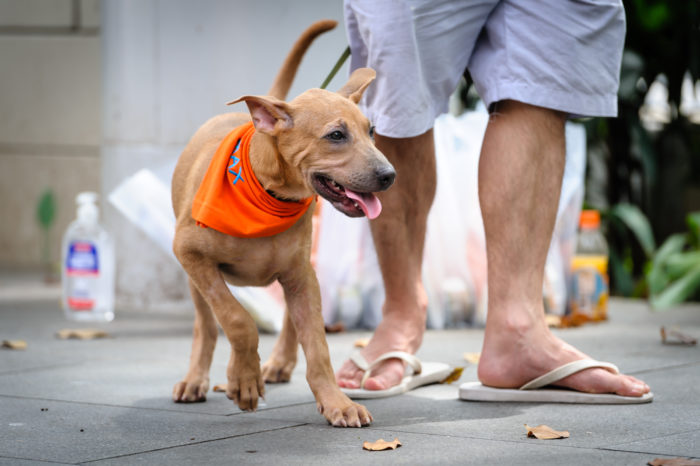 Street photography - Puppy with adoption volunteer