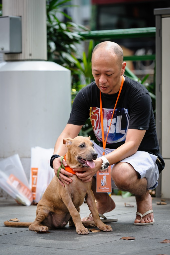 Street photography - Puppy with an adoption volunteer