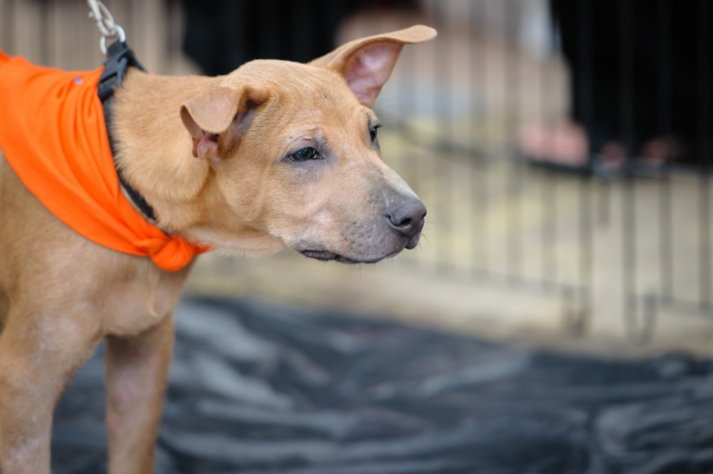 Street photography - Dog at adoption drive