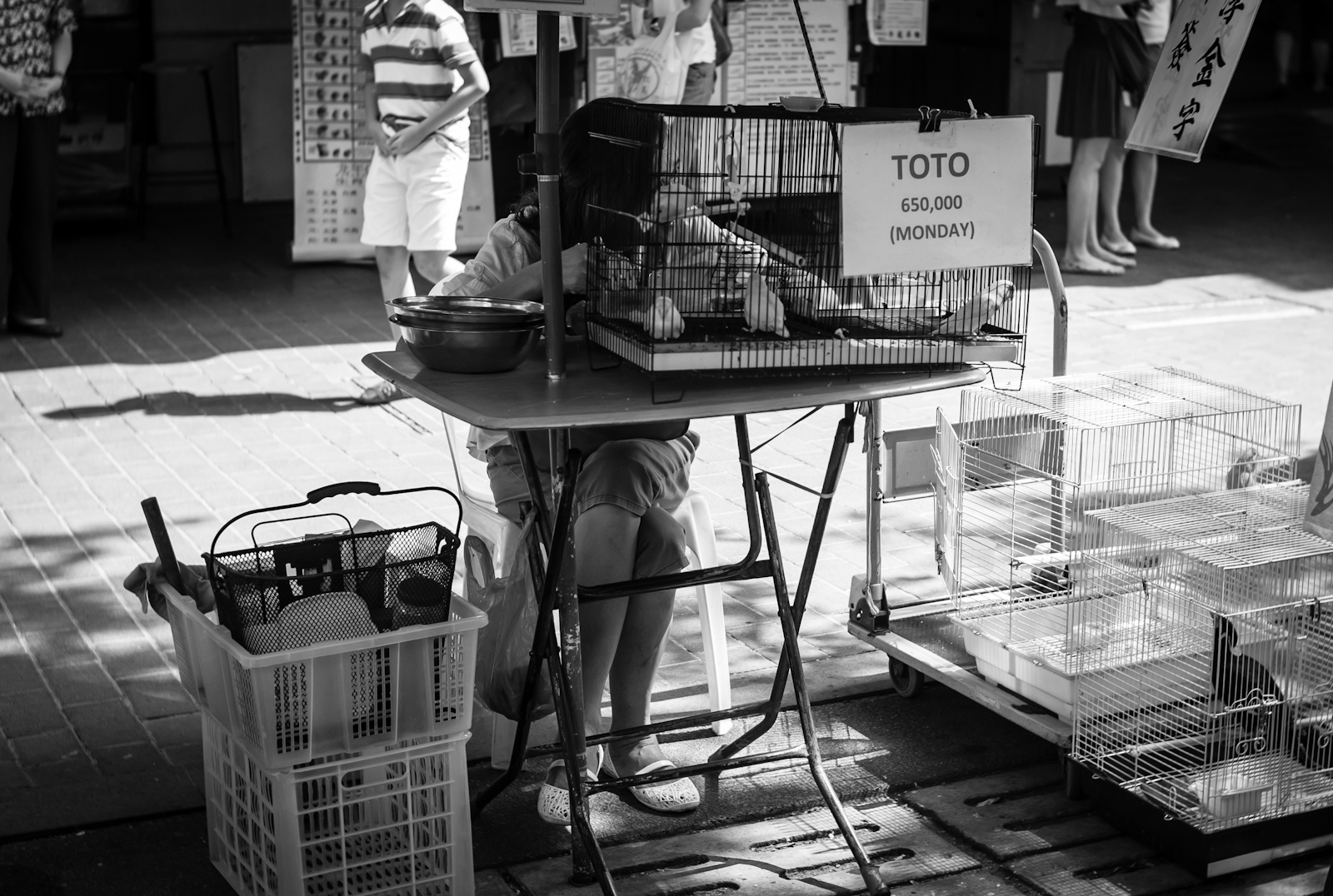 Street photography - Birds that can guess the winning lottery number
