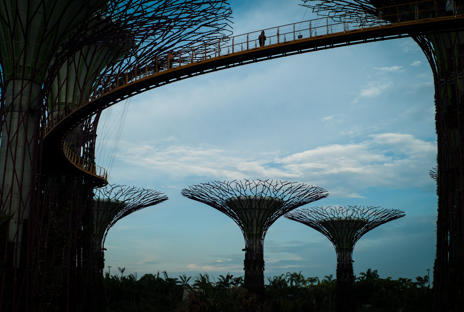 Silhouette of Gardens by the Bay